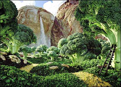 Broccoli Forest by Carl Warner